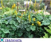 Растения для тени или Тенистый сад. 0513d0f3d07at