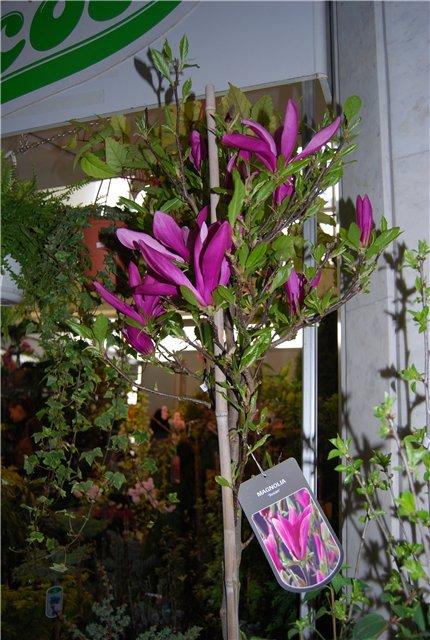 «Цветы.Ландшафт и Приусадебное хозяйство Весна - 2010» - Страница 3 B94daab6531a