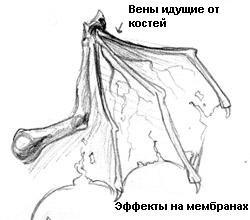 Рисуем крылья (урок) 309dd4648361