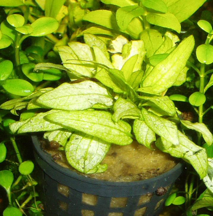Новые или редкие растения Acc550a9e19a