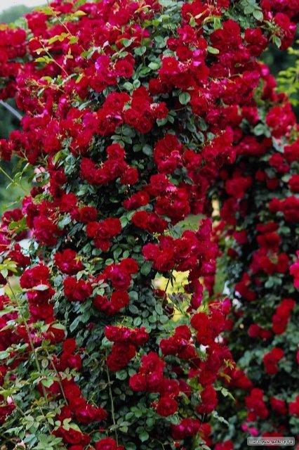 Крым. Никитский ботанический сад. 508052d84468