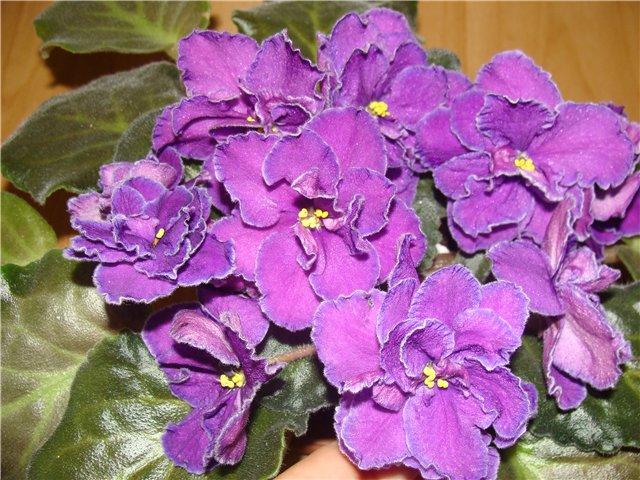 Весеннее  цветение (Хваст от Веры) - Страница 3 7e874b3352bc