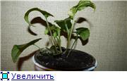 Цветы - Страница 2 853441b15d8ft