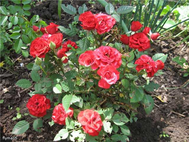 Во саду ли, в огороде... - Страница 2 2fcde6a72286