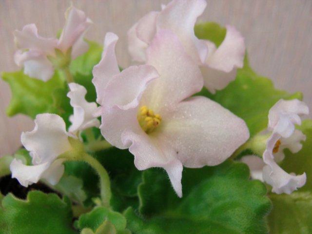 Мои цветочки - Страница 13 0823d4739012