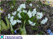 Весна идёт... E1dfe4796227t