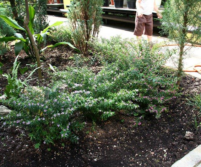 Экскурсия по Ботаническому Саду 93b636a5a037