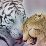 Аватары с животными - Страница 2 4fb8d0b27c66