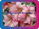 продам семена экзотических растений - Страница 3 B1747ad82dee