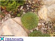Cад Людмилы Ивановой из черкасс 8f6d42208f5dt