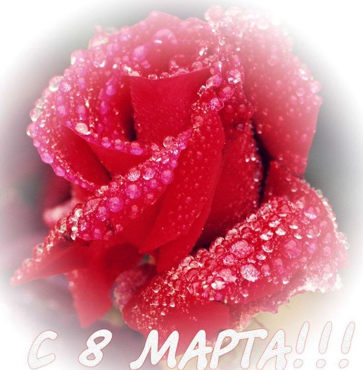 Мартовские поздравления - Страница 3 391ebd6c6eb1
