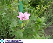 Лето в наших садах - Страница 2 2c133e256574t
