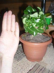 продам семена экзотических растений 5366d5cb76c8