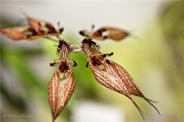 Выставка орхидей в Государственном биологическом музее им. К.А.Тимирязева D48f3ec8919e