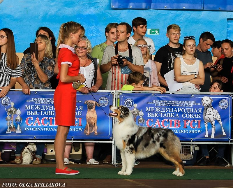 Выставочные успехи наших собак - 5 - Страница 30 787850ee1316