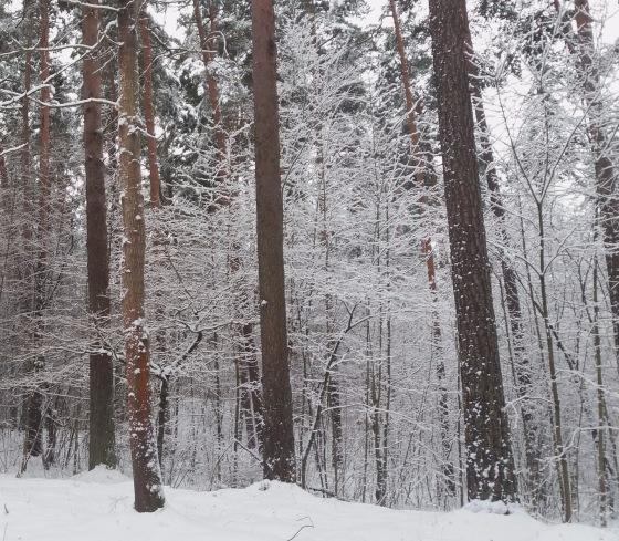 Зимняя сказка на наших фотографиях - Страница 14 8c20537f5a67