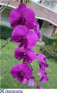 Орхидеи и прочая красота на о. Пхукет 60c67ba04517t