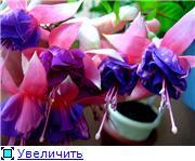 ФУКСИИ В ХАБАРОВСКЕ  - Страница 11 47a0aa42b257t
