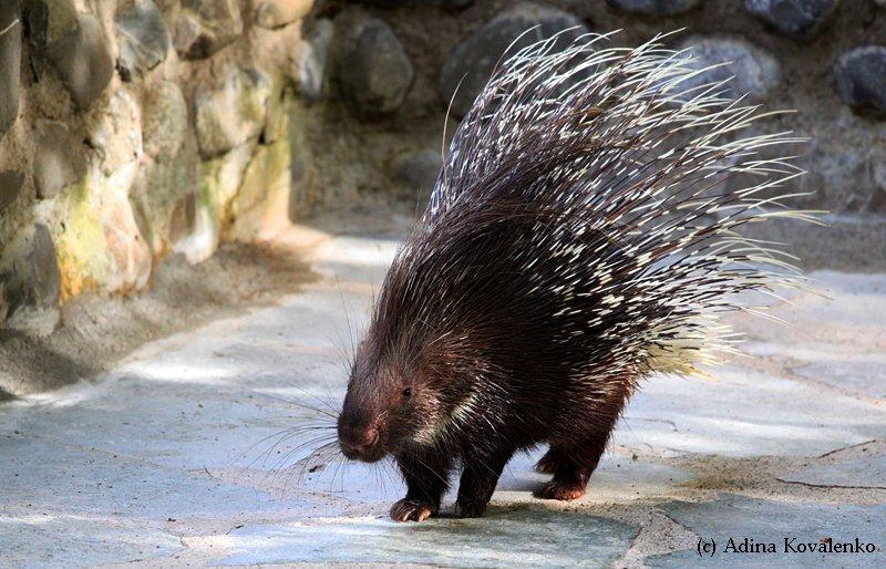 Швейцарский зоопарк Cbf7ea1ed530