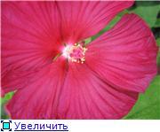 Хвасталка, у кого чего выросло интересного ;)  58859e5ee327t