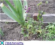 Лето в наших садах - Страница 8 56cca350b7c2t