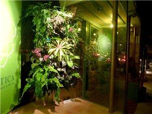 Вертикальное озеленение 47edf6357ae7