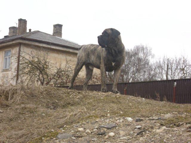 Собаки Татьяны Моисеенковой, кот Мензурка - Страница 3 F4d0de61ed78