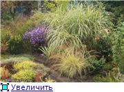 Cад Людмилы Ивановой из черкасс 3544df3e87dat
