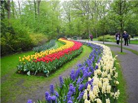 Рай тюльпанов или Кёкнхов - 2012 52bcea7b5f14t