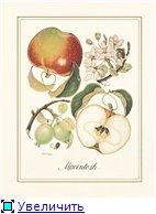 Фрукты, овощи, напитки, натюрморты 4a66850b3848t