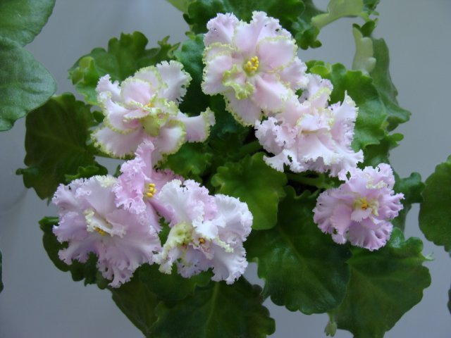 Мои цветочки - Страница 19 710b82034efb