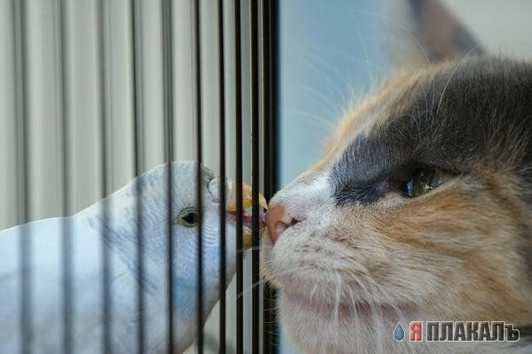 Фотографии кошек 97d95abedc93