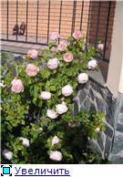 наши домашние цветники - Страница 2 08b7f7a37b51t