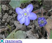 Весенне цветущие 4165c7ed5481t