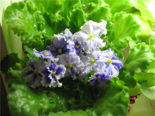 Мои цветики-семицветики 06614c20d013
