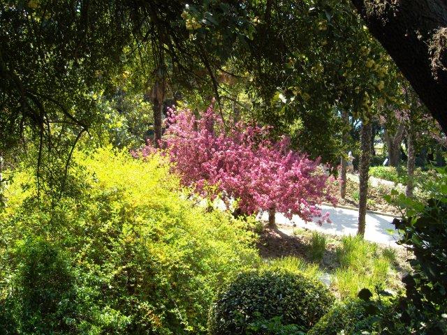 Крым. Никитский ботанический сад. Ba6beba8d41e