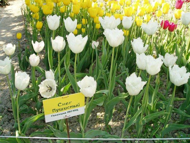 Крым. Никитский ботанический сад. 10d83e522348
