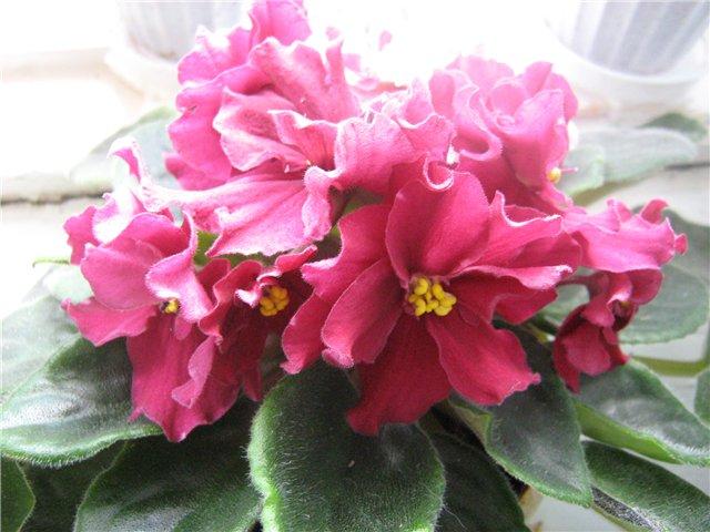 Моё цветочное богатство 9c8ac27245de