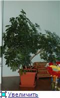 Мой домашний мини-садик B35fe37b46c4t