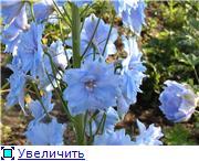 Лето в наших садах - Страница 4 2c59b19175f2t