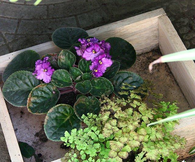 Экскурсия по Ботаническому Саду 10c310fe056e