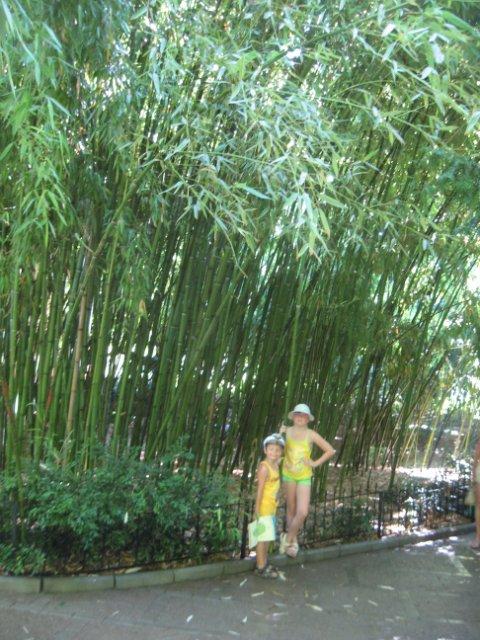 Никитский ботанический сад. Bb611a5db4e0