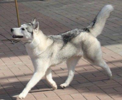 Почему вы приобрели свою собаку? - Страница 2 74a38d52f468