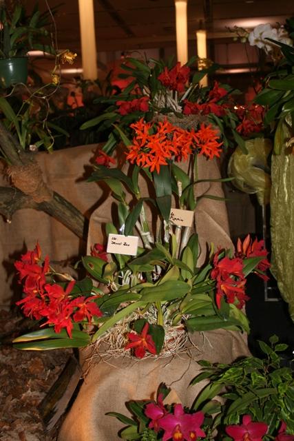 Выставка орхидей в Дрездене (март 2012г.) - Страница 2 A481d8a37186