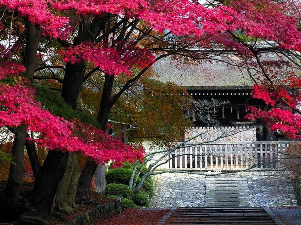 Красивые пейзажы Японии A1d087c029a4
