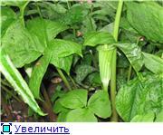 Растения для тени или Тенистый сад. 08f7208140e9t