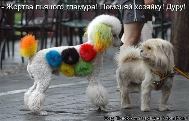Смешное фото собак Fe9f7263c8fb