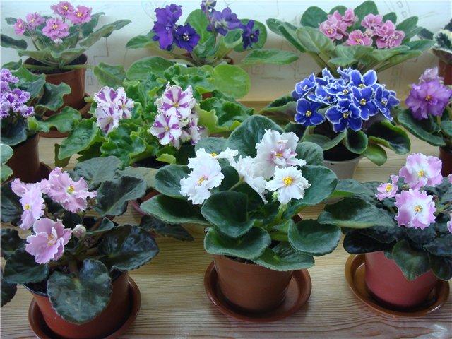 Весеннее  цветение (Хваст от Веры) 01ad1a1d3dc6