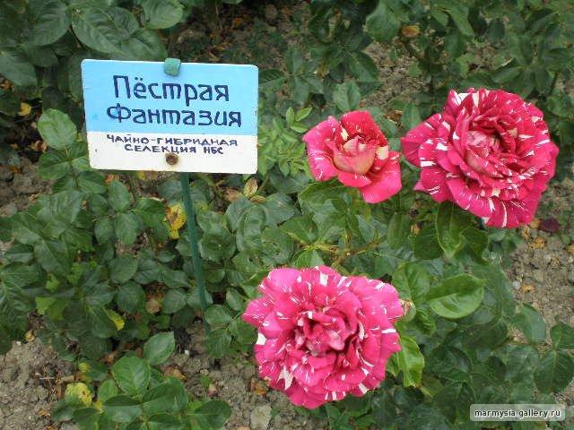 Крым. Никитский ботанический сад. 5ff552c7bc61