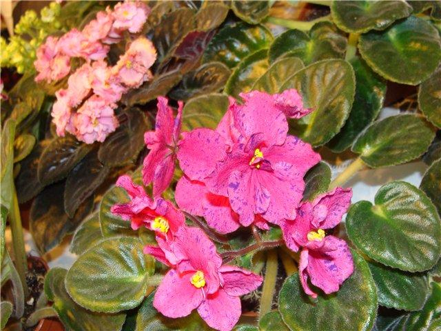 Международая выставка «Цветы.Ландшафт .Усадьба 2010» Астана - Страница 2 1d5d8ba604ac
